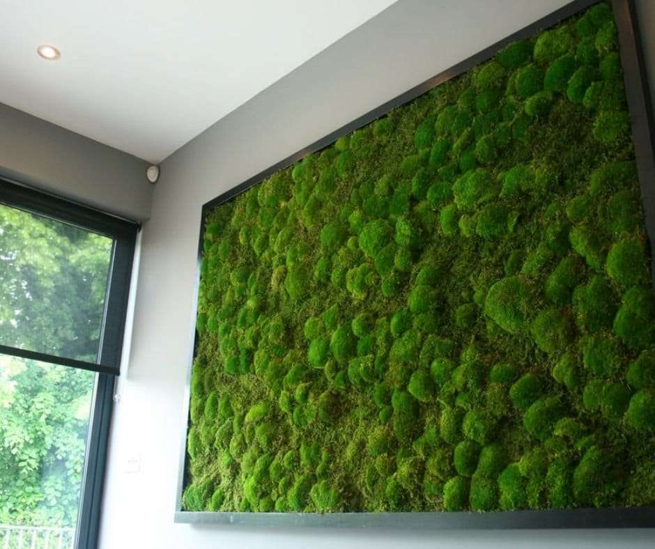 moss natural sound absorber acoustic