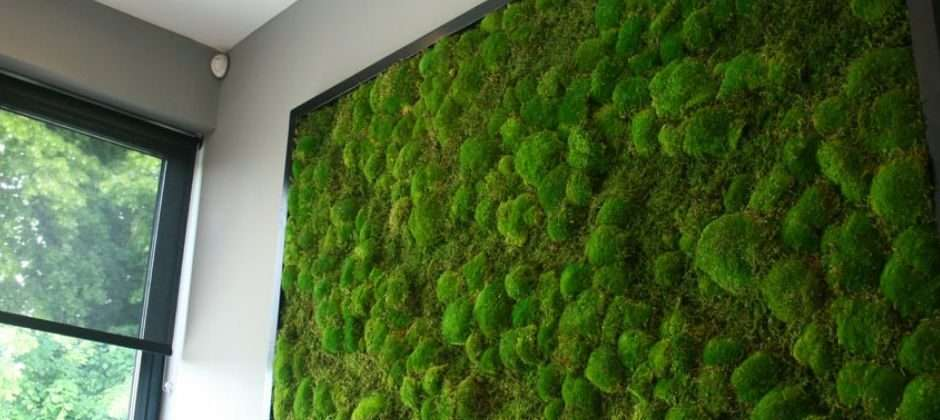 Acoustic | Moss | Wall