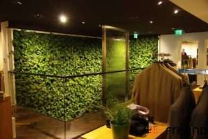 Why are moss walls so popular?