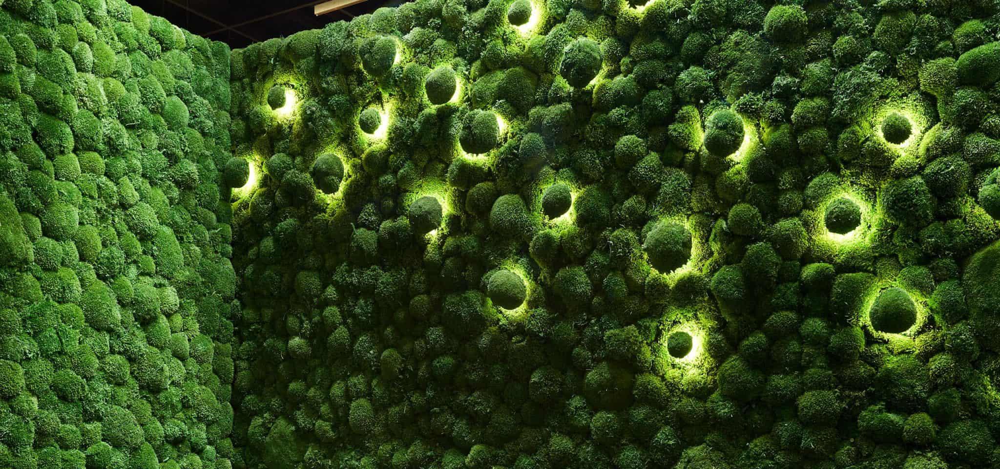freund moss lighting 1